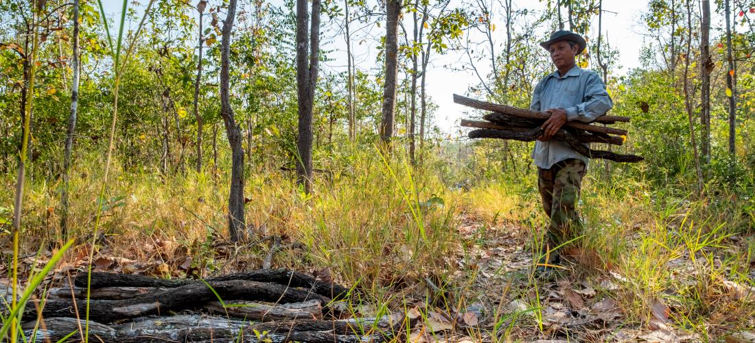 Les communautés forestières engagées dans la transition énergétique au Cambodge