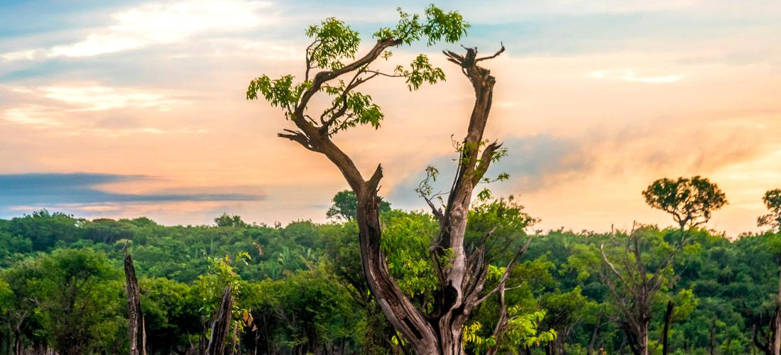 Face à la destruction de la forêt amazonienne, le cri d'alarme des associations
