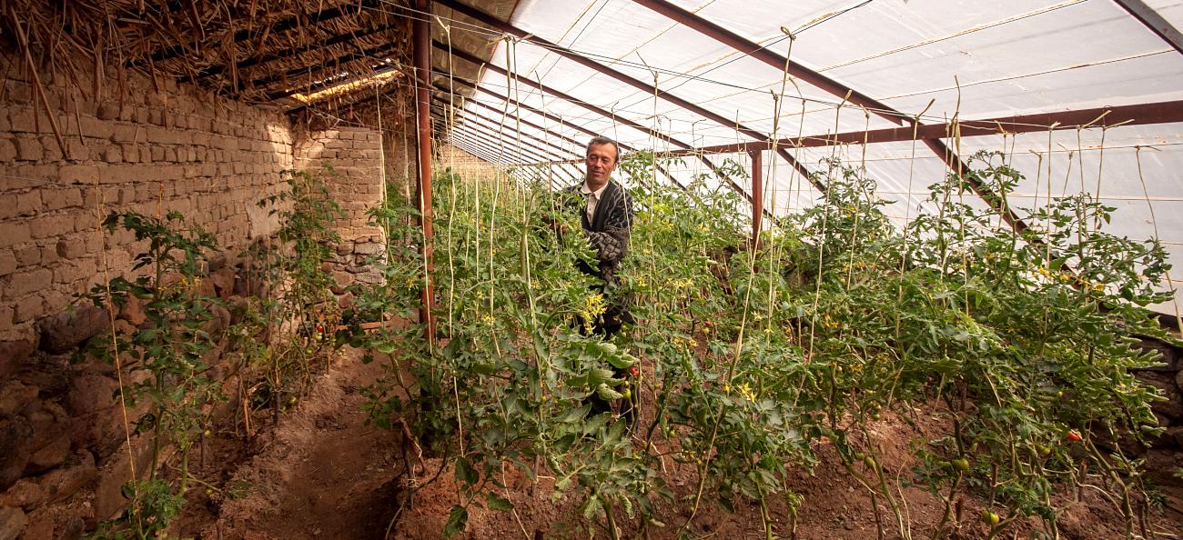 Habitat bioclimatique et appui au développement agricole au Tadjikistan