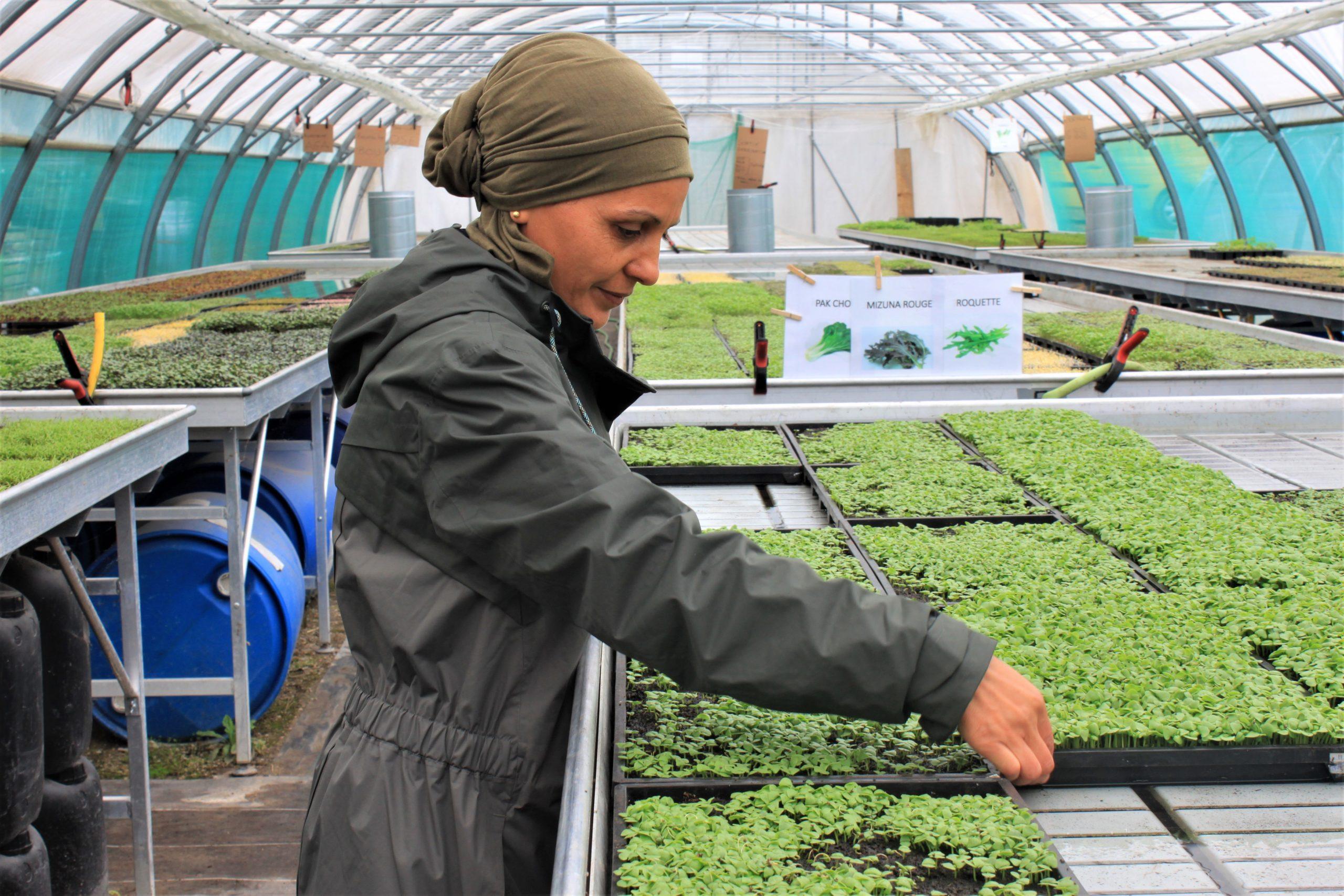 La serre bioclimatique urbaine, jeune pousse encouragée par le Geres à Marseille