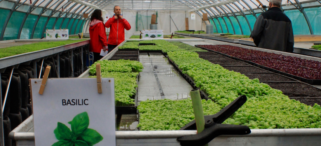 À Marseille, la serre bioclimatique du Paysan Urbain s'adapte pour surmonter la crise