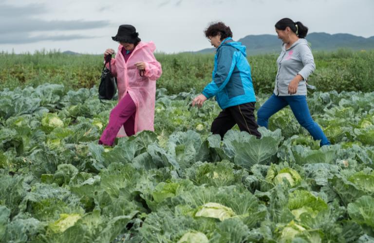 Emancipation of women Mongolia market gardening agriculture